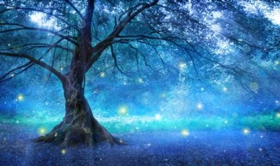 spiritual lessons from a tree